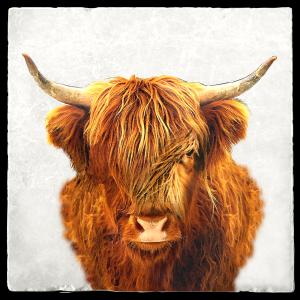 Highland-Cow-Trivet